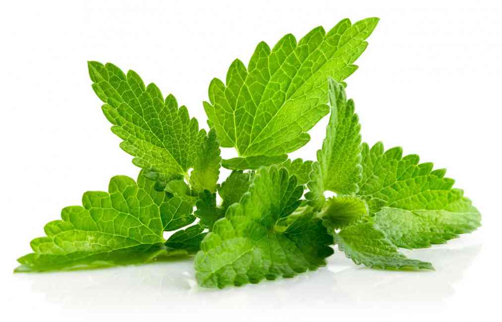 Bright green mint leaves.